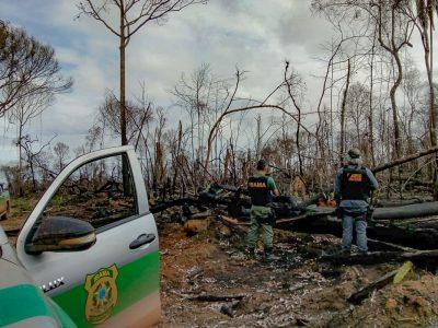 Ibama embarga 8 mil hectares em MT e desativa 4 serrarias no PA