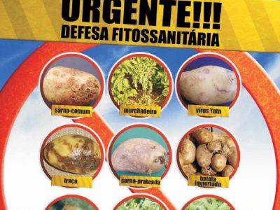 Publicação feita na Revista Batata Brasileira.