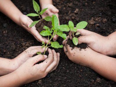 Educação Ambiental.  Revista Síntese – Direito Ambiental, 2012.