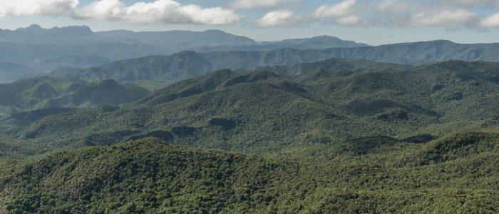 Instrução Normativa do Ibama estabelece novos procedimentos para anuência à supressão de vegetação em Mata Atlântica.