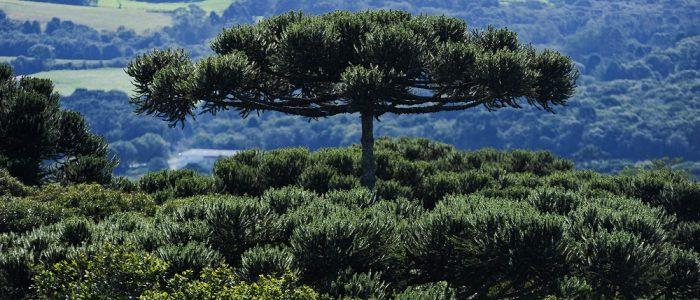 Proprietários de reservas naturais do Paraná recebem incentivo econômico para preservação.