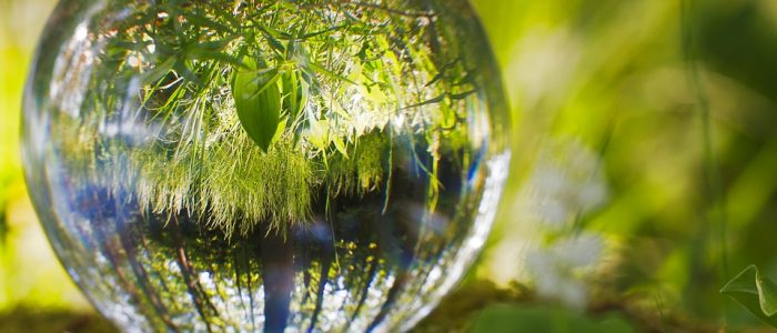 STJ – Primeira Seção consolida entendimento de que responsabilidade administrativa ambiental é subjetiva