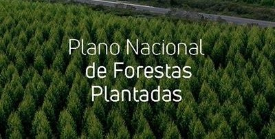 Publicação: Plano de Florestas Plantadas