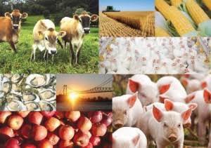 """""""Defesa agropecuária será foco para evitar perdas"""", diz ministra da Agricultura"""