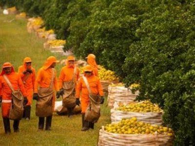 Com geração de mais de 60 mil vagas em 2019, agronegócio vira referência
