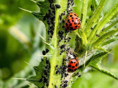 Instrução Normativa MAPA traz novas especificações de referência para defensivos agrícolas biológicos