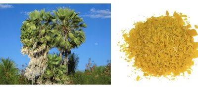Fruticultura: nanoemulsão de cera de carnaúba