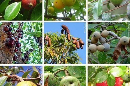 Lista de espécies nativas da sociobiodiversidade de valor alimentício.
