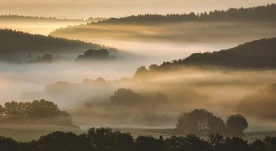 Floresta + Bioeconomia é lançado pelo Ministério do Meio Ambiente